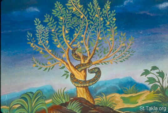 St-Takla.org Image: The tree of the knowledge of good and evil (Genesis 2:9) ���� �� ���� ������ ����: ���� ����� ����� ����� (����� 2: 9)