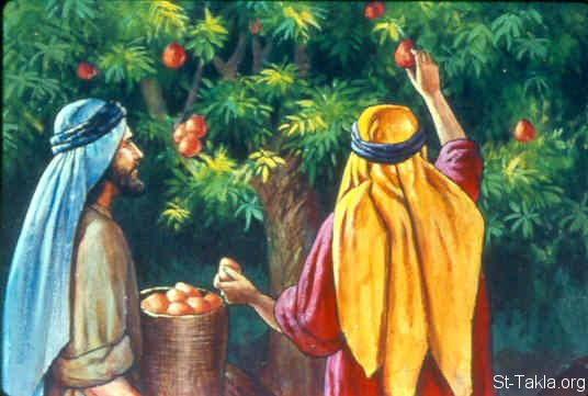 St-Takla.org Image: Israel spies: Then they came to the Valley of Eshcol, and there cut down a branch with one cluster of grapes; they carried it between two of them on a pole. (Numbers 13:23) ���� �� ���� ������ ����: ������ �������: ��� ��� (����� 13: 23)