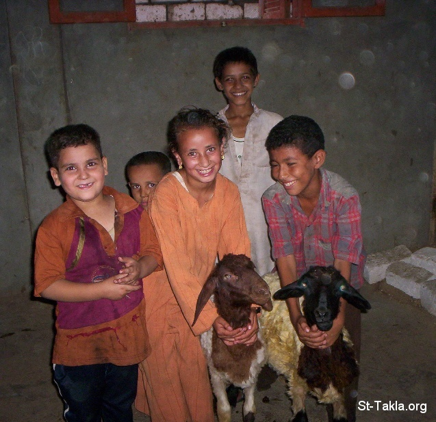 St-Takla.org Image: Some children playing with goats at one of Egypt's villages, happiness ���� �� ���� ������ ����: ������ �� ������� ������ ������� �� ��� ������ �� ���� �� ��� ��ѡ ����͡ �������