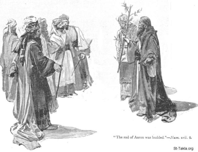 St-Takla.org Image: The rod of Aaron was budded (Numbers 17) - Unknown illustrator ���� �� ���� ������ ����: ��� ����� ���� ����� (����� 17) - ����� ��� �����