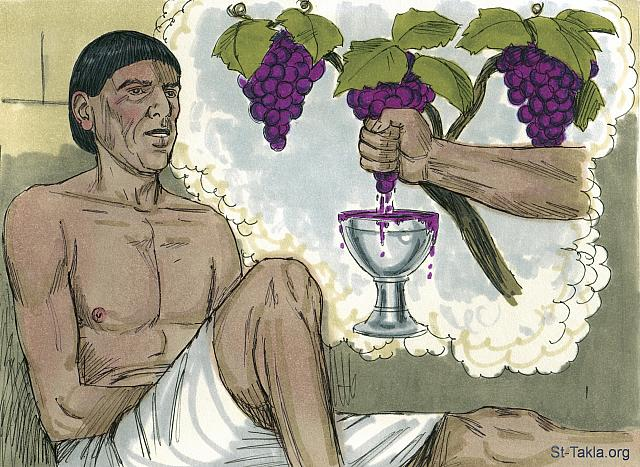 "St-Takla.org Image: The cupbearer went first. 'In my dream I saw a vine with three branches. As soon as it budded, it blossomed, and its clusters ripened into grapes. Pharaoh's cup was in my hand. I took the grapes, squeezed them into Pharaoh's cup and gave it to him.' (Genesis 40: 9-11) - ""Dreams of the baker and cupbearer"" images set (Genesis 40:1-23): image (3) - Genesis, Bible illustrations by James Padgett (1931-2009), published by Sweet Media صورة في موقع الأنبا تكلا: ""فقص رئيس السقاة حلمه على يوسف وقال له: «كنت في حلمي وإذا كرمة أمامي. وفي الكرمة ثلاثة قضبان، وهي إذ أفرخت طلع زهرها، وأنضجت عناقيدها عنبا. وكانت كأس فرعون في يدي، فأخذت العنب وعصرته في كأس فرعون، وأعطيت الكأس في يد فرعون»"" (التكوين 40: 9-11) - مجموعة ""أحلام رئيس السقاة ورئيس الخبازين"" (التكوين 40: 1-23) - صورة (3) - صور سفر التكوين، رسم جيمز بادجيت (1931-2009)، إصدار شركة سويت ميديا"