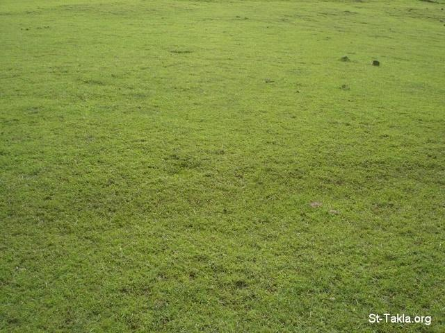 St-Takla.org         Image: Grass, a photo from our journey to Ethiopia, 2008 ����: ��� ���� ���� ������ �� ������ ��� ������ ��� 2008