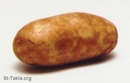 البطاطا فعالة المناعة وحماية الكبد
