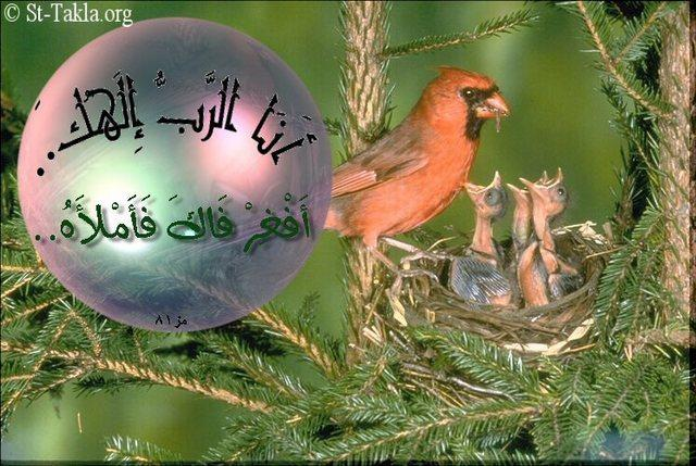"St-Takla.org           Image: A bird feeding it's offspring.. Verse: ""I am the LORD your God.. Open your mouth wide, and I will fill it"" (Psalm 81:10) صورة: طائر يطعم أولاده..  آية: ""أَنَا الرَّبُّ إِلهُكَ.. أَفْغِرْ فَاكَ فَأَمْلأَهُ"" (مزمور 81: 10)"