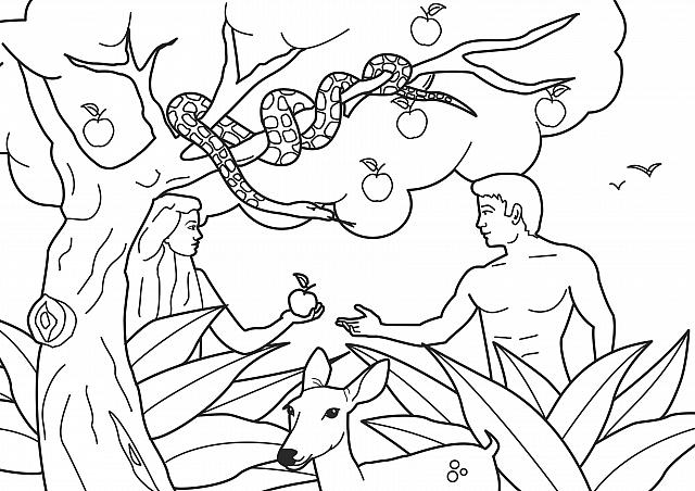 St-Takla.org Image: Coloring picture: Adam and Eve ate from the forbidden tree ���� �� ���� ������ ����: ���� ����� ���� ����� ������ �� ������ �������