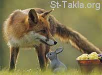 أمثلة وكنايات مستمدة من عالم الحيوان  Www-St-Takla-org--Fox-and-Rabbit