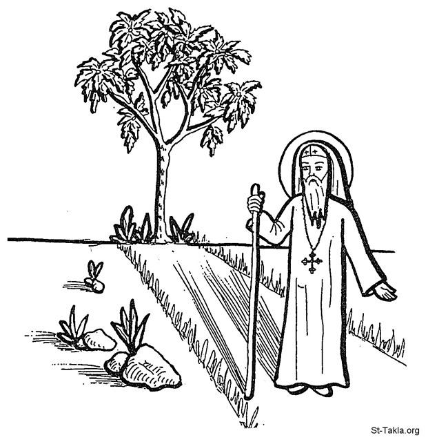 St-Takla.org Image: Coptic Monk beside a tree ���� �� ���� ������ ����: ���� ���� ���� ����� ����