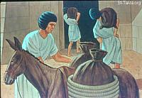 Image: Joseph gathered up all the food of the seven years which were in the land of Egypt<br>صورة يوسف يخزن القمح