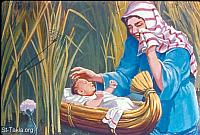 Image: Moses is put the ark of bulrushes, and is laid in the reeds by the river's bank<br>صورة موسى يوضع في السبت وسط حشائش الماء