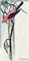 Image: 09 Red bird with black wings on a branch border image