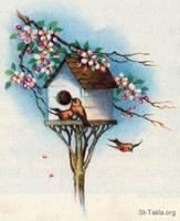 Image: 20 Birdhouse under apple blossom branch
