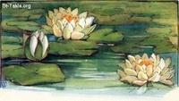 Image: 28 Water lilies