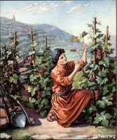 Image: 47 Young man pruning the grapevines