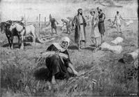 Image: ruth gleaning in the field of boaz