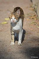 Image: alex zoo 2015 cats a 0221