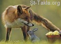 Image: Fox and Rabbit صورة ثعلب و أرنب
