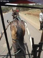 Image: Horse Carriage 3arabia Karro صورة عربية كارو