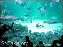 St-Takla.org Image: Sharks with fish ���� �� ���� ������ ����: ��� ��� �� �����