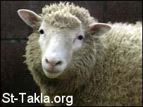 St-Takla.org Image: Dolly the sheep, first successful cloning صورة في