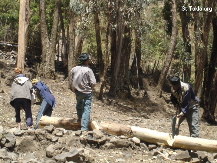 St-Takla.org         Image: People cutting wood (Camphor trees), from St-Takla.org's 2008 Ethiopia photos ����: ���� ������ �� ��� ����ȡ ���ȡ ������ ��� ��� ������ѡ �� ��� ���� ���� ������ ���� �������� ��� 2008