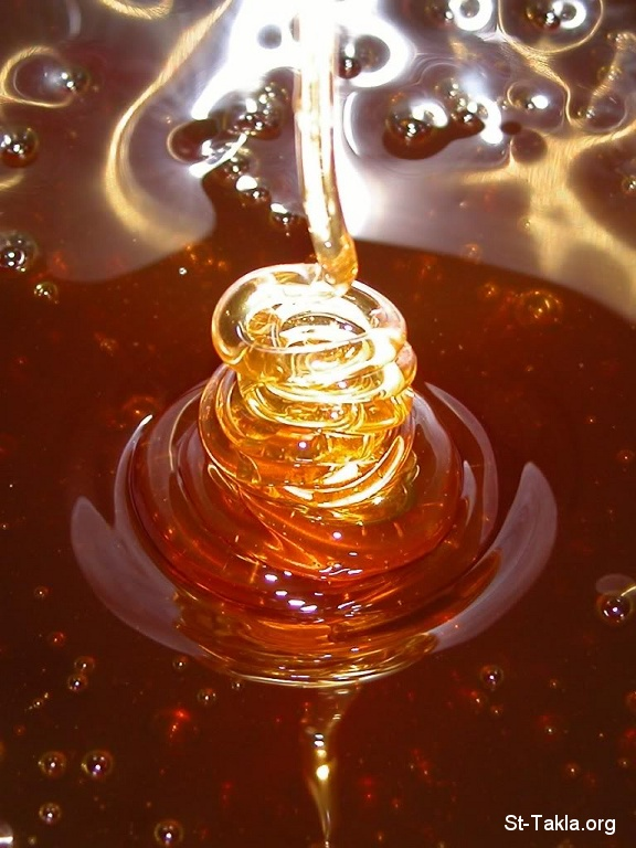 St-Takla.org         Image: Honey صورة: عسل