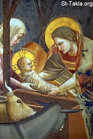 St-Takla.org Image: Nativity of Jesus Christ ���� �� ���� ������ ����: ���� ����� ����� ������